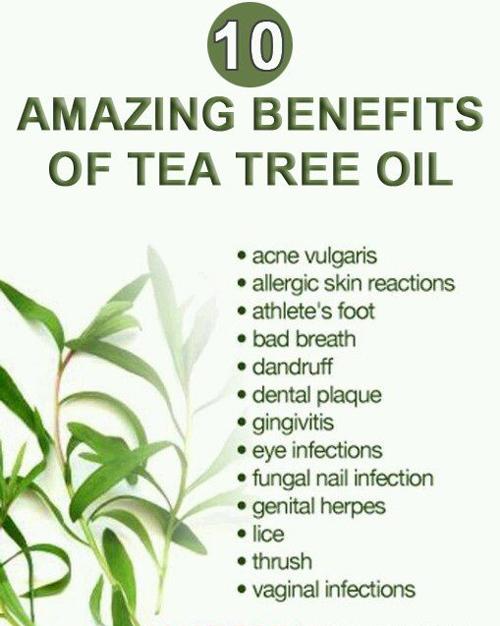 Ser extract de arbore de ceai beneficii